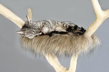 árvore de gato barata